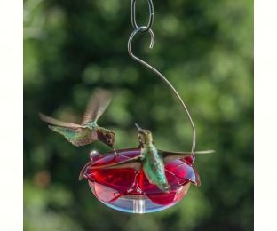 Ruby Sipper Hummingbird Feeder Clear