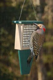 Suet Feeder with Tail Prop Hunter Driftwood
