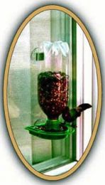 Window Feeder Green